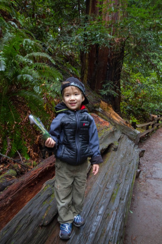 Boy on fallen trunk in Muir Woods National Monument