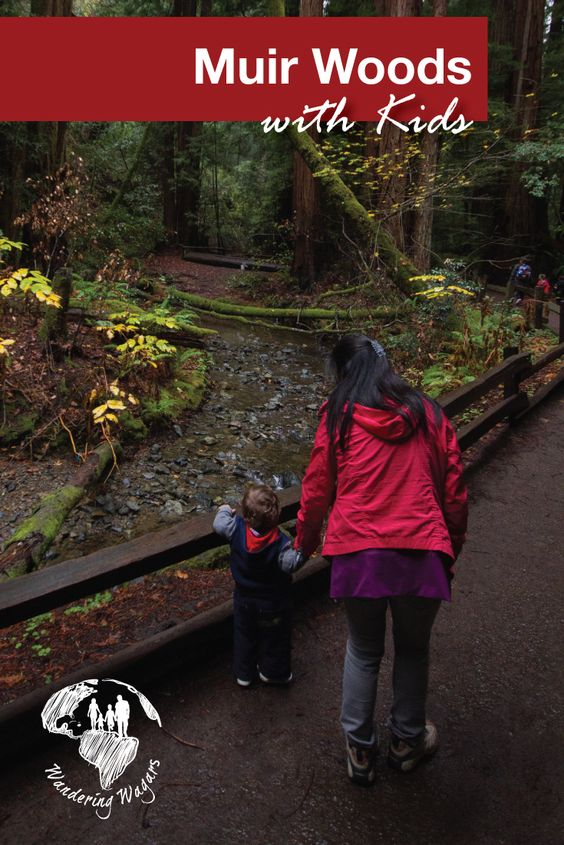 Muir Wood with Kids - Pinterest