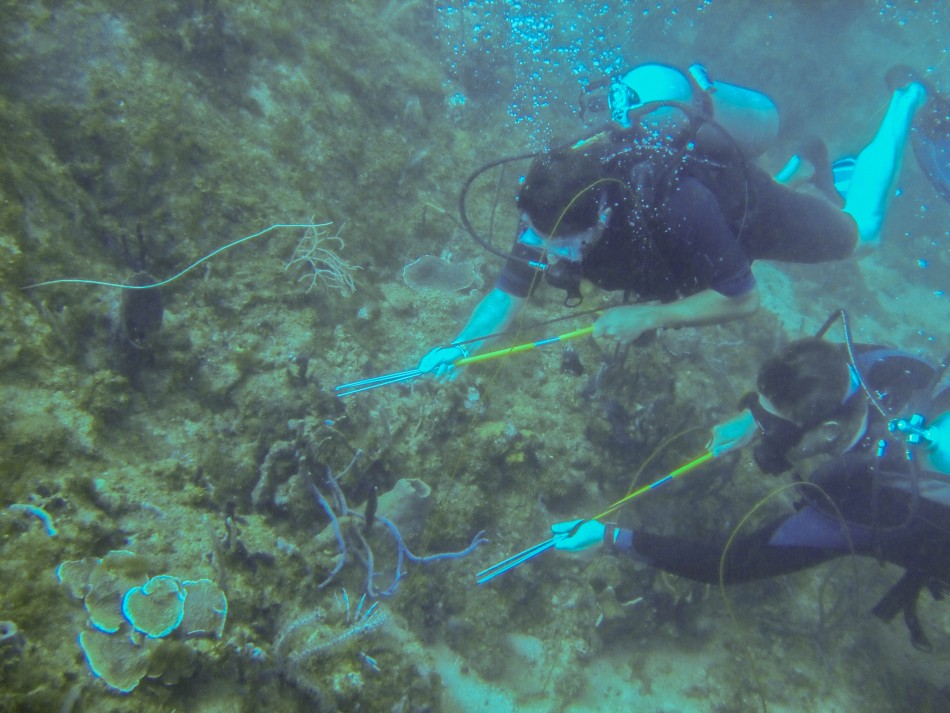 SCUBA divers hunt for lionfish in Grenada