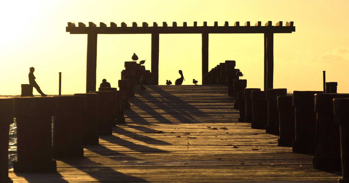 A silhouette of a pier in Mexico with a man, a pelican and some seagulls
