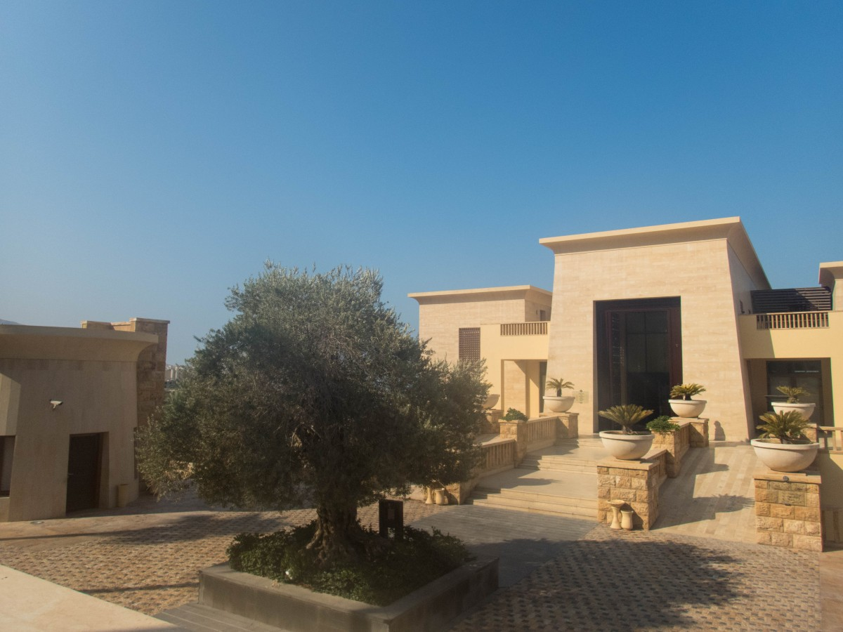 Sand coloured buildings under a blue sky with a large olive tree at the centre.