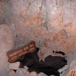 The mummified remains of a bobcat inside the Grand Canyon Caverns - Caves you can visit with kids