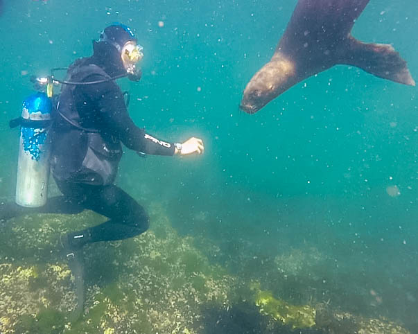 Diver with sea lion in Punta Loma Reserve, Argentina.