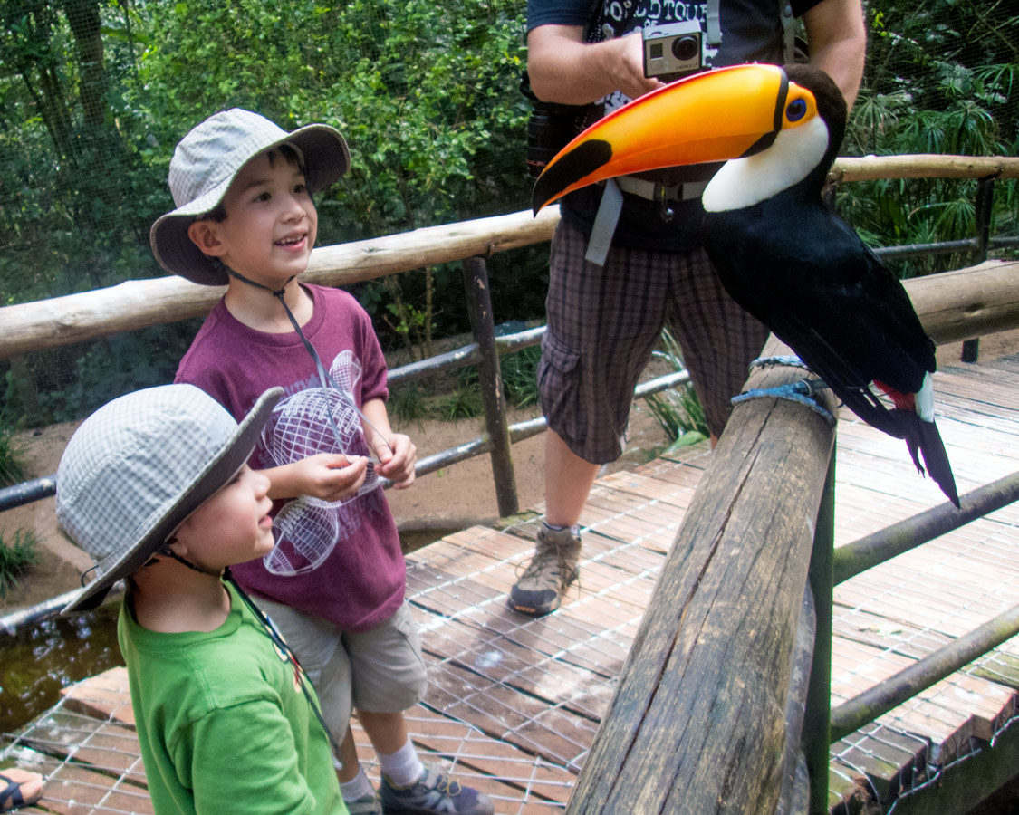 Boys look at a toucan in Das Aves Bird Park which is a great addition to a visit to Iguazu Falls Brazil with kids.