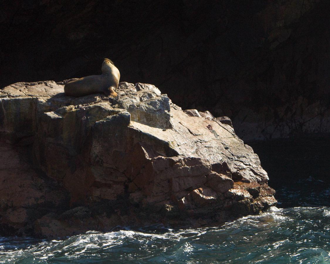 A sea lion sun bathes on the rocks in the Paracas Nature Reserve near Paracas Peru
