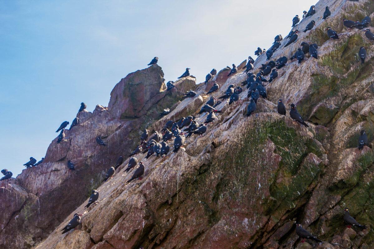 Birds line the rocks at the Paracas National Reserve in Paracas Peru