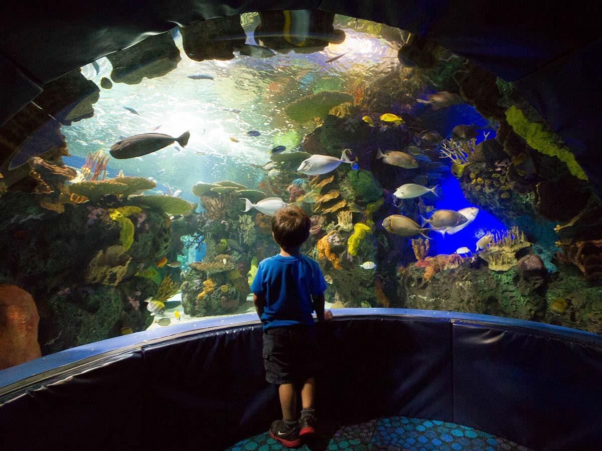 Boy watching fish at Ripleys Aquarium in Toronto Ontario