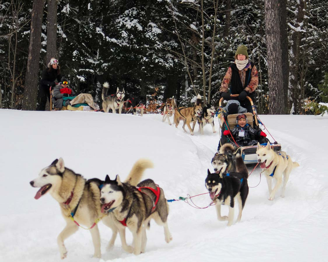 Wandering Wagars boys dog sledding at Mont Tremblant Quebec