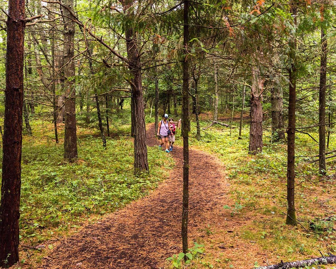 The Wild Center NY iForest Walk