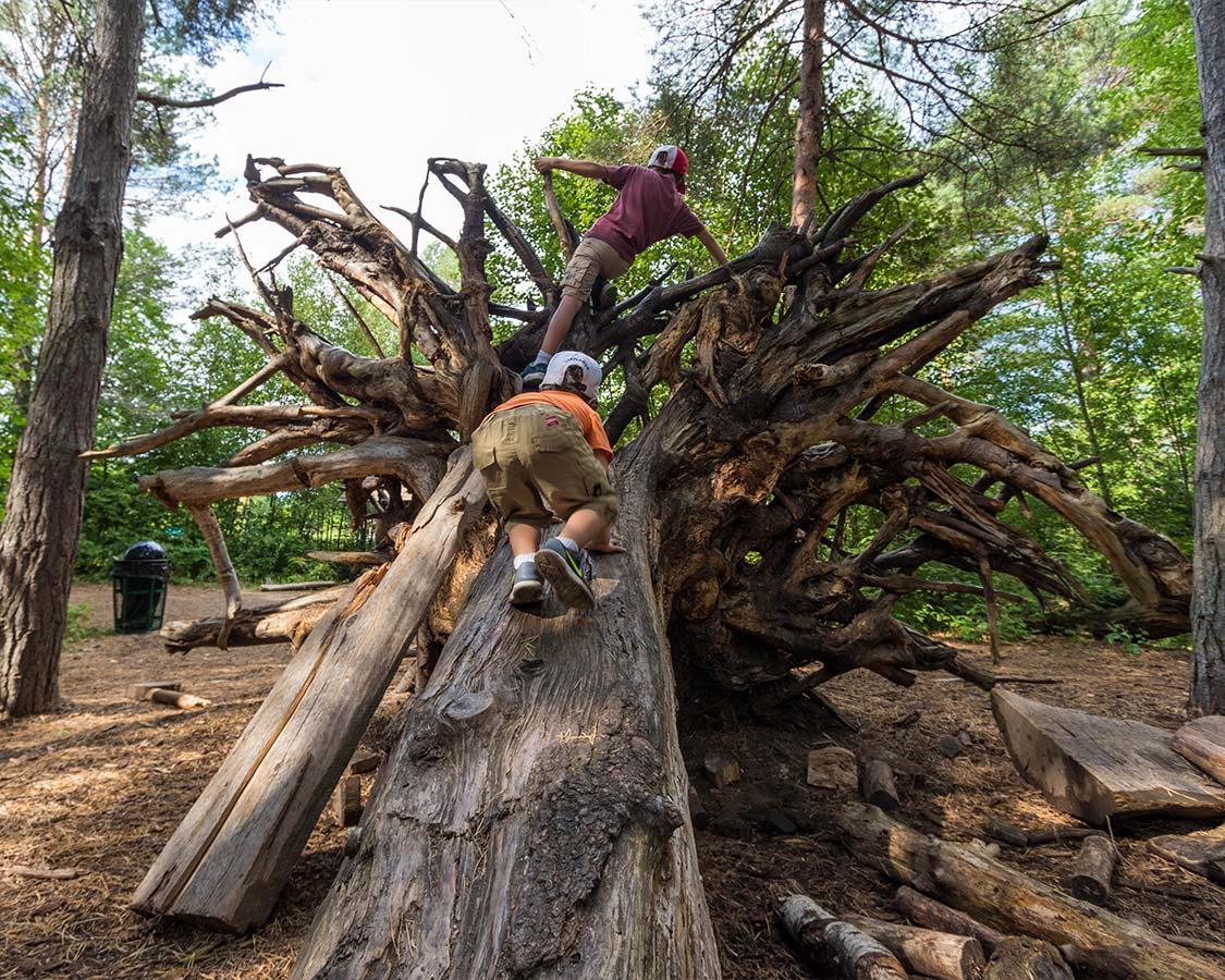 Wild Center Pine Forest Playground