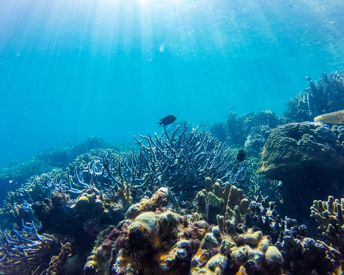 Coron Island Philippines Siete Pecados Marine Park