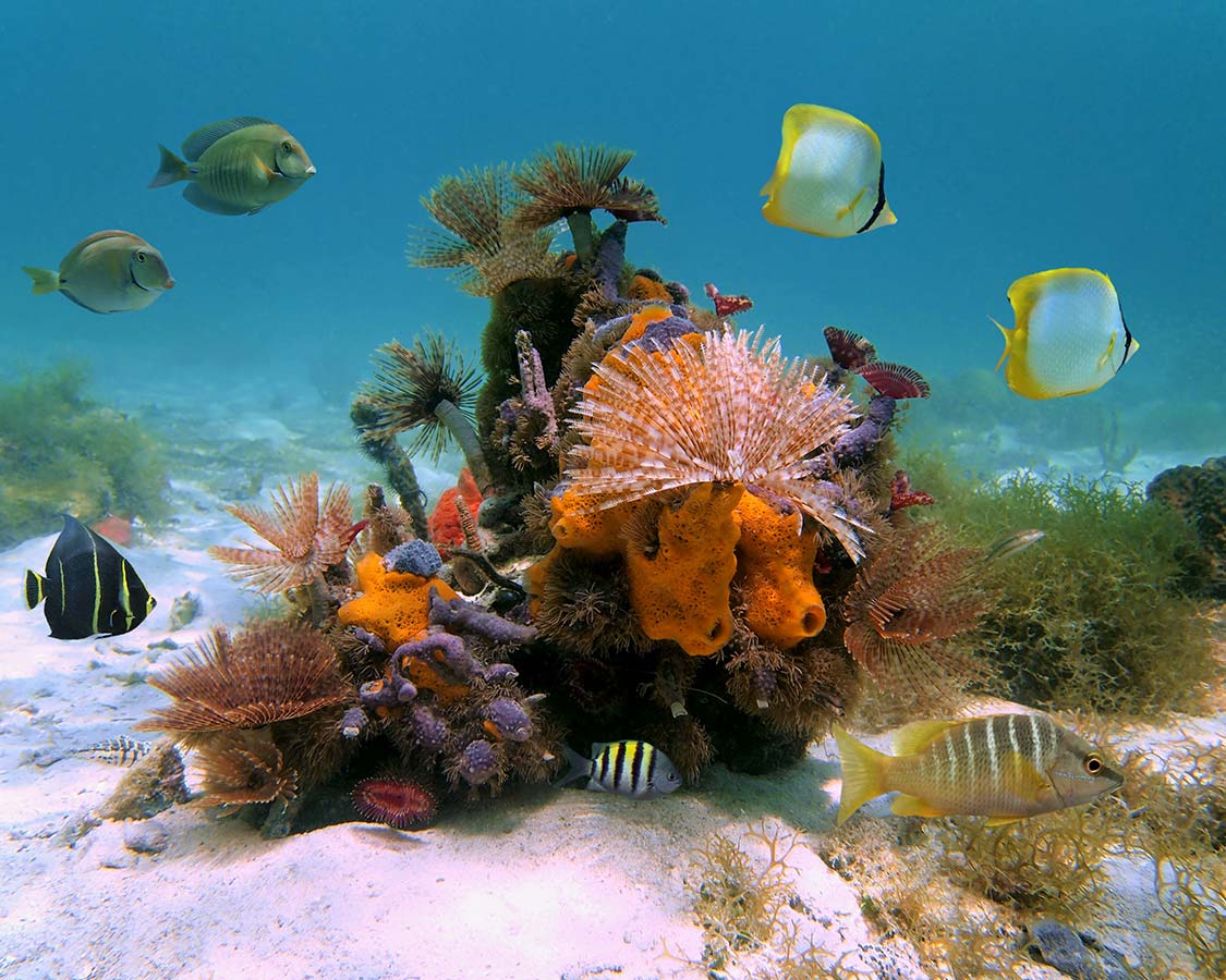 Caribbean Diving Destinations Turks and Caicos colorful coral