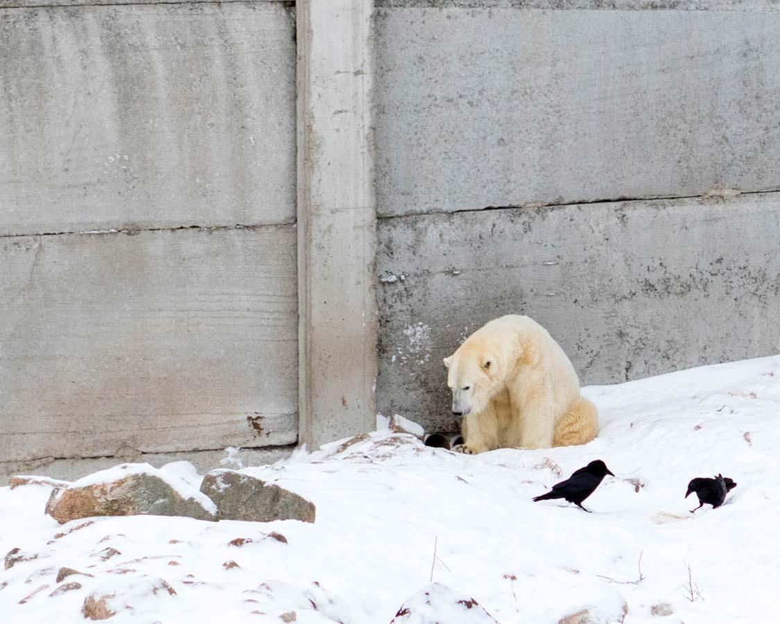 Things to do in Rovaniemi Ranua Zoo