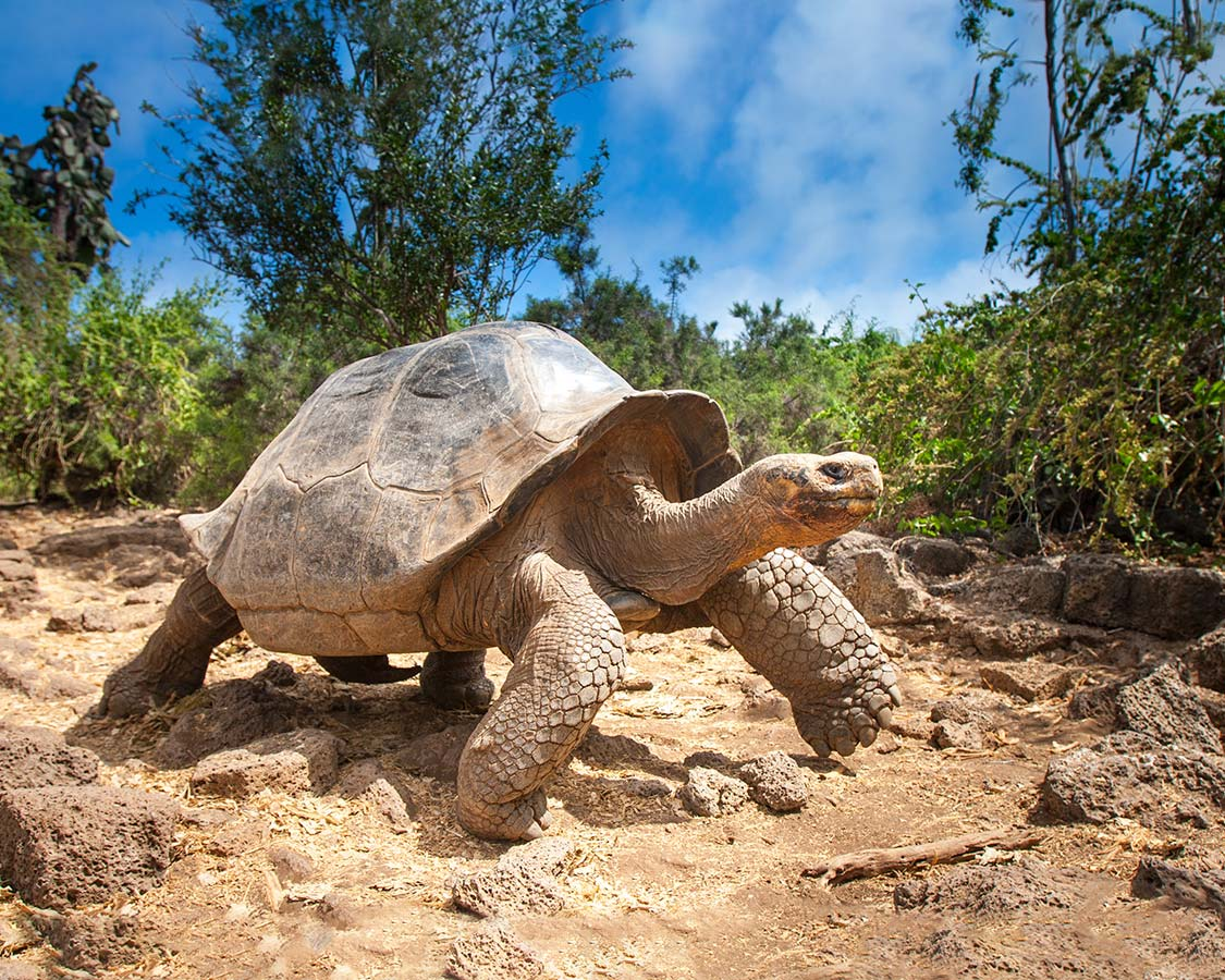 Family-friendly-wildlife-experiences-galapagos-tortoise