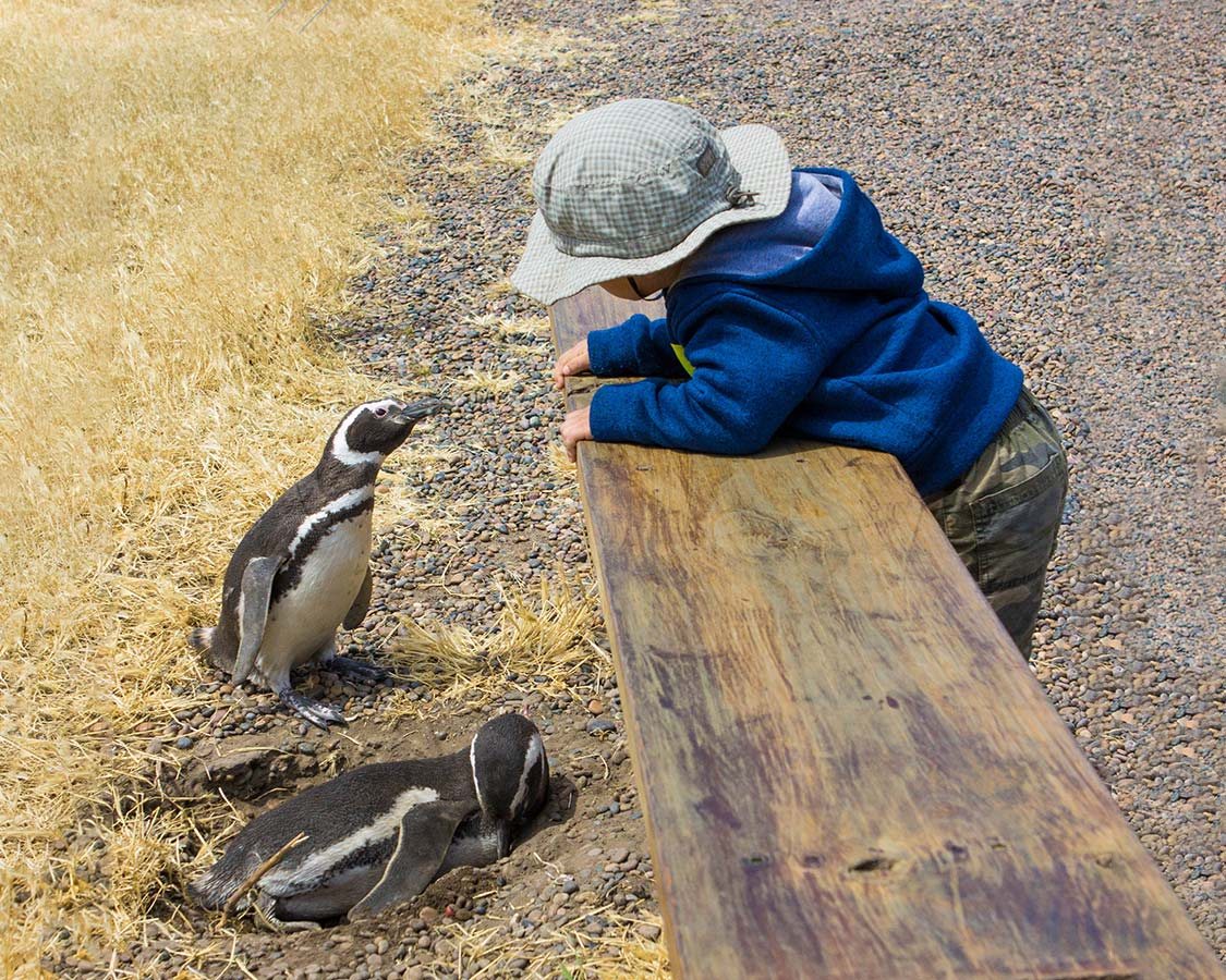 family-friendly Wildlife Experiences Penguins In Argentina
