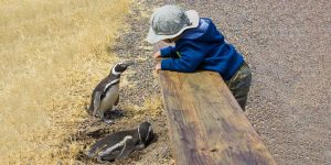 wildlife experiences for families