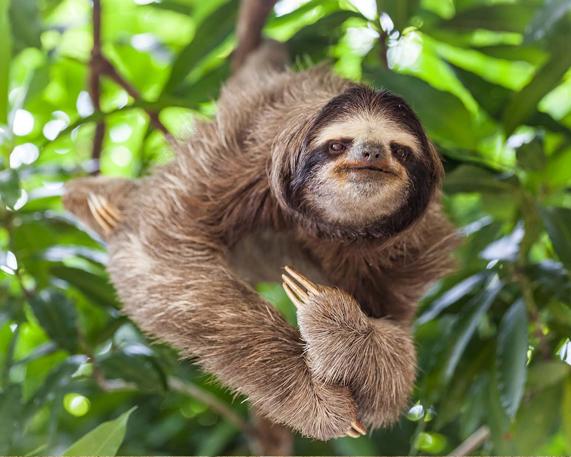 Wildlife-experiences-for-kids-Sloths-in-Costa-Rica