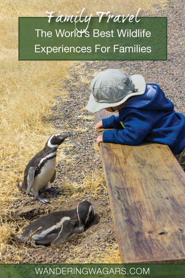 Family friendly wildlife experiences
