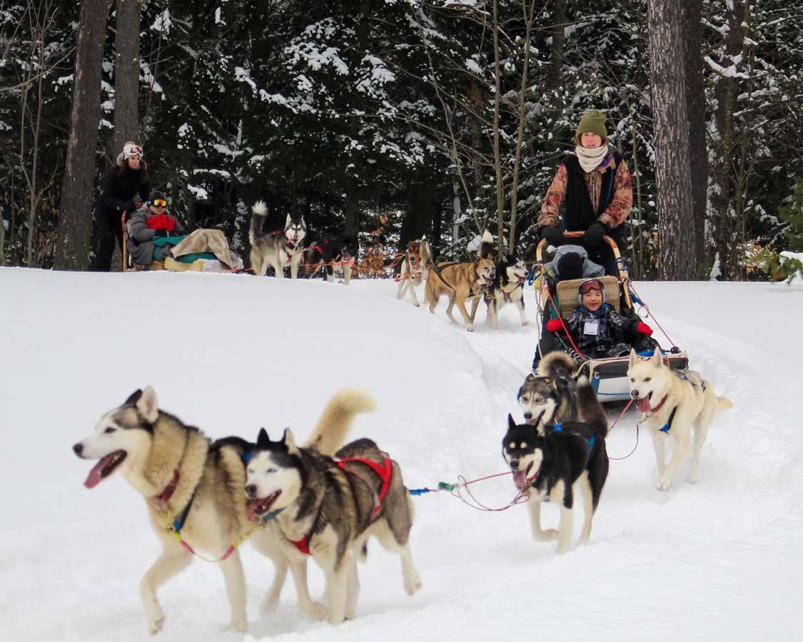 Arrowhead Provincial Park dog sledding