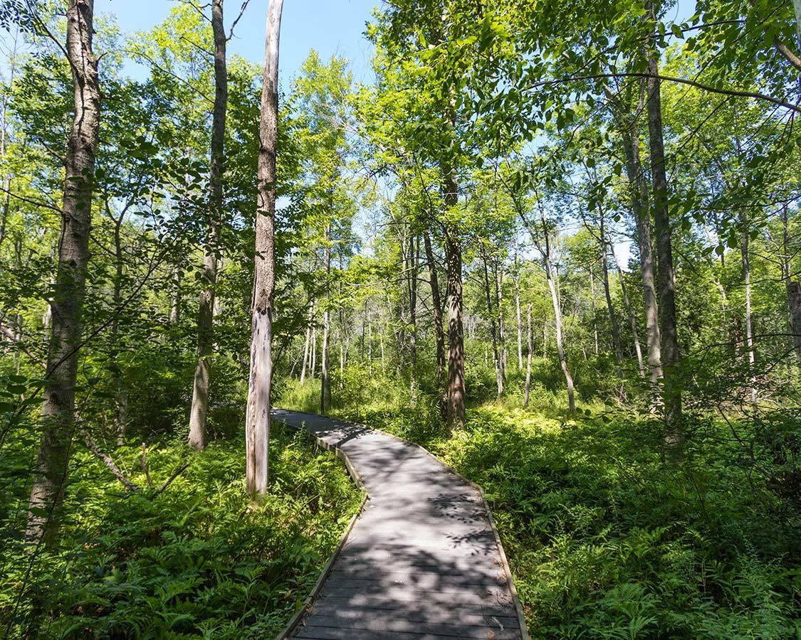 Presqu Ile PP Jobes Woods Trail