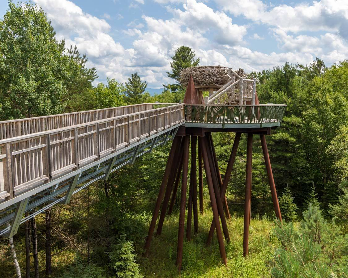 Things to do in Tupper Lake New York The Wild Center Wild Walk