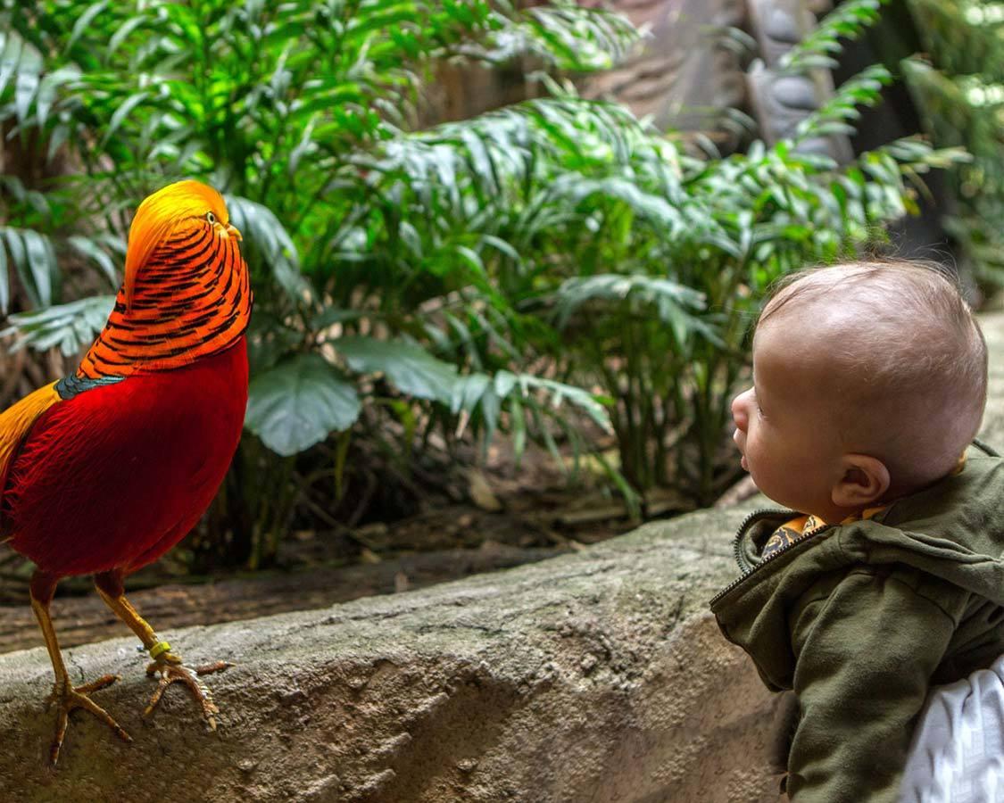 Niagara Falls with kids Bird Kingdom Aviary