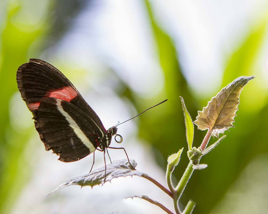 Things To do in Niagara Falls with Kids Niagara Butterfly Conservatory