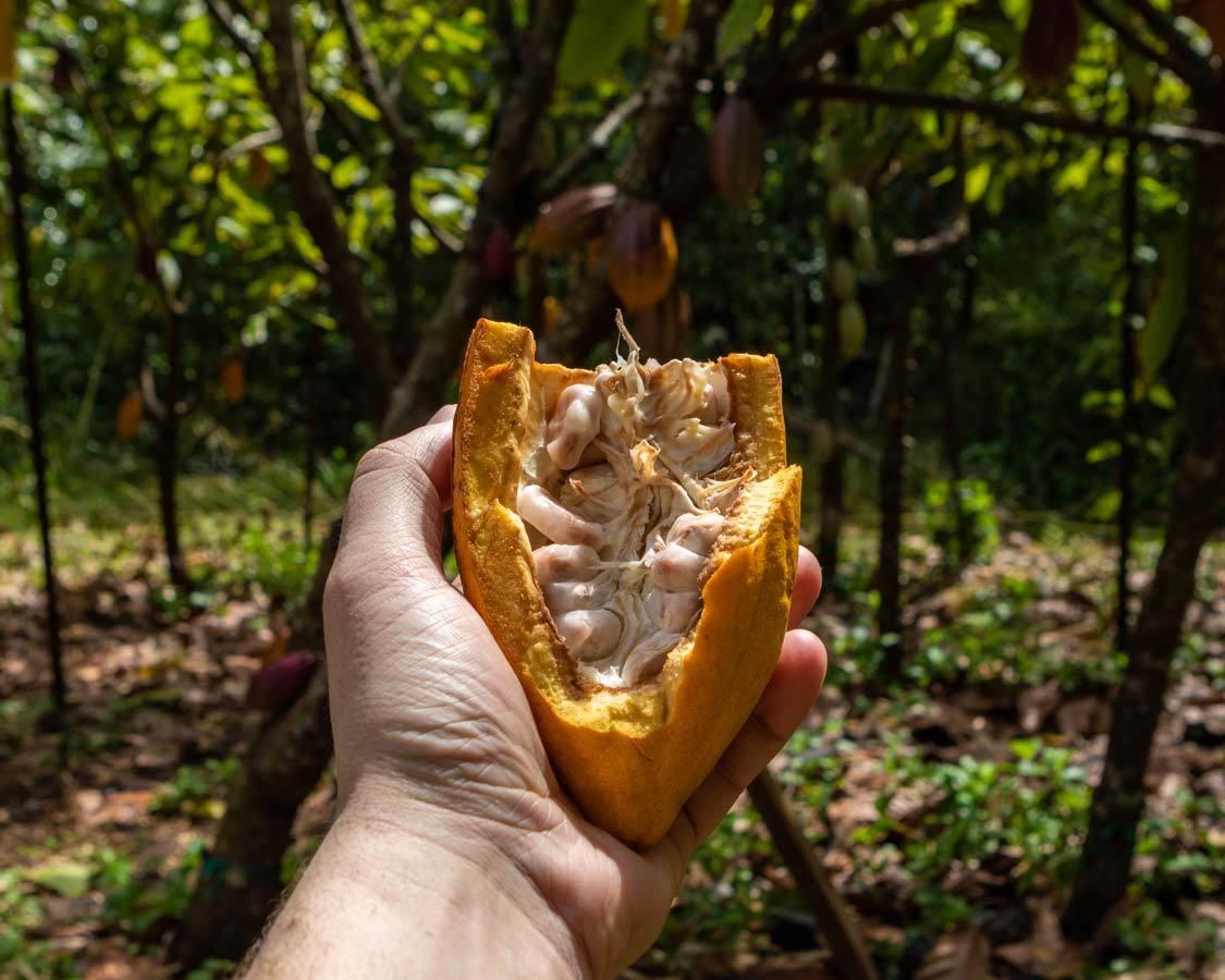 Cocoa bean tour of Lydgate Farms Kauai family travel