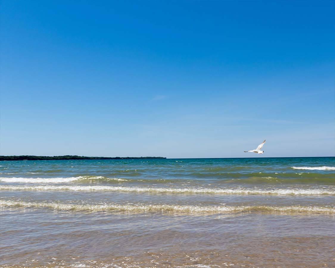 Sandbanks Dune Beach seagull