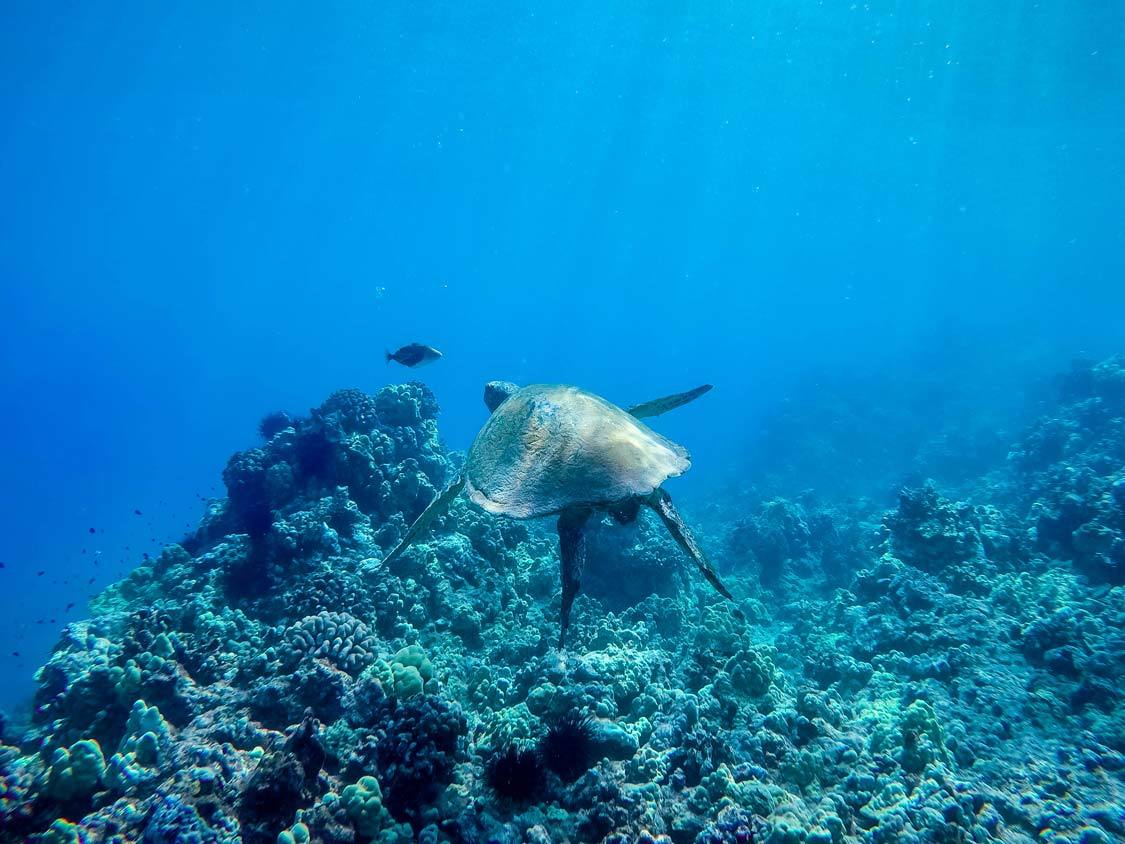 Molokini Snorkeling: What Is The Best Molokini Snorkel Tour For Families