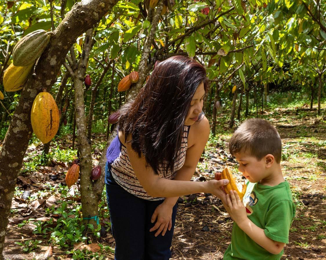 Kauai chocolate tour with kids