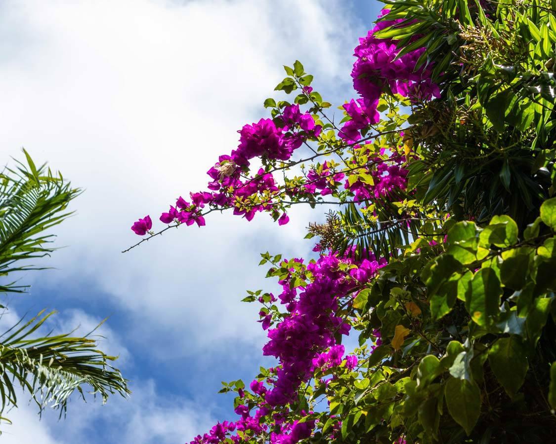 Kauai fruit tour