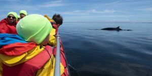 Tadoussac whale watching