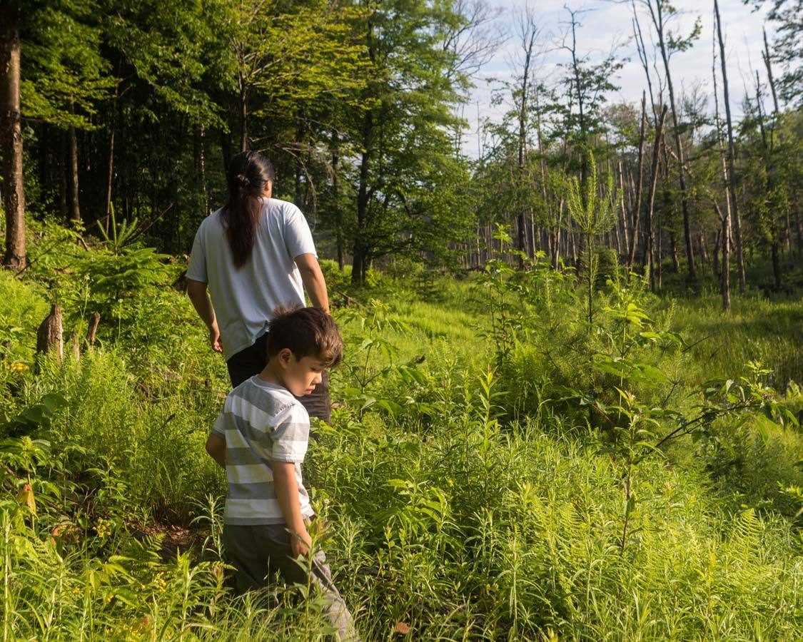 Beaver Watching In Quebec Indigenous Tourism