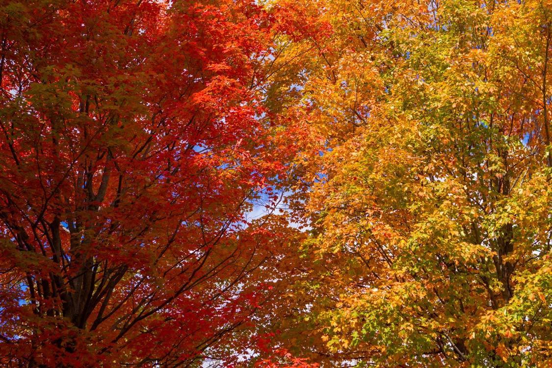 Kawartha Highlands Provincial Park Fall Colour Peterborough