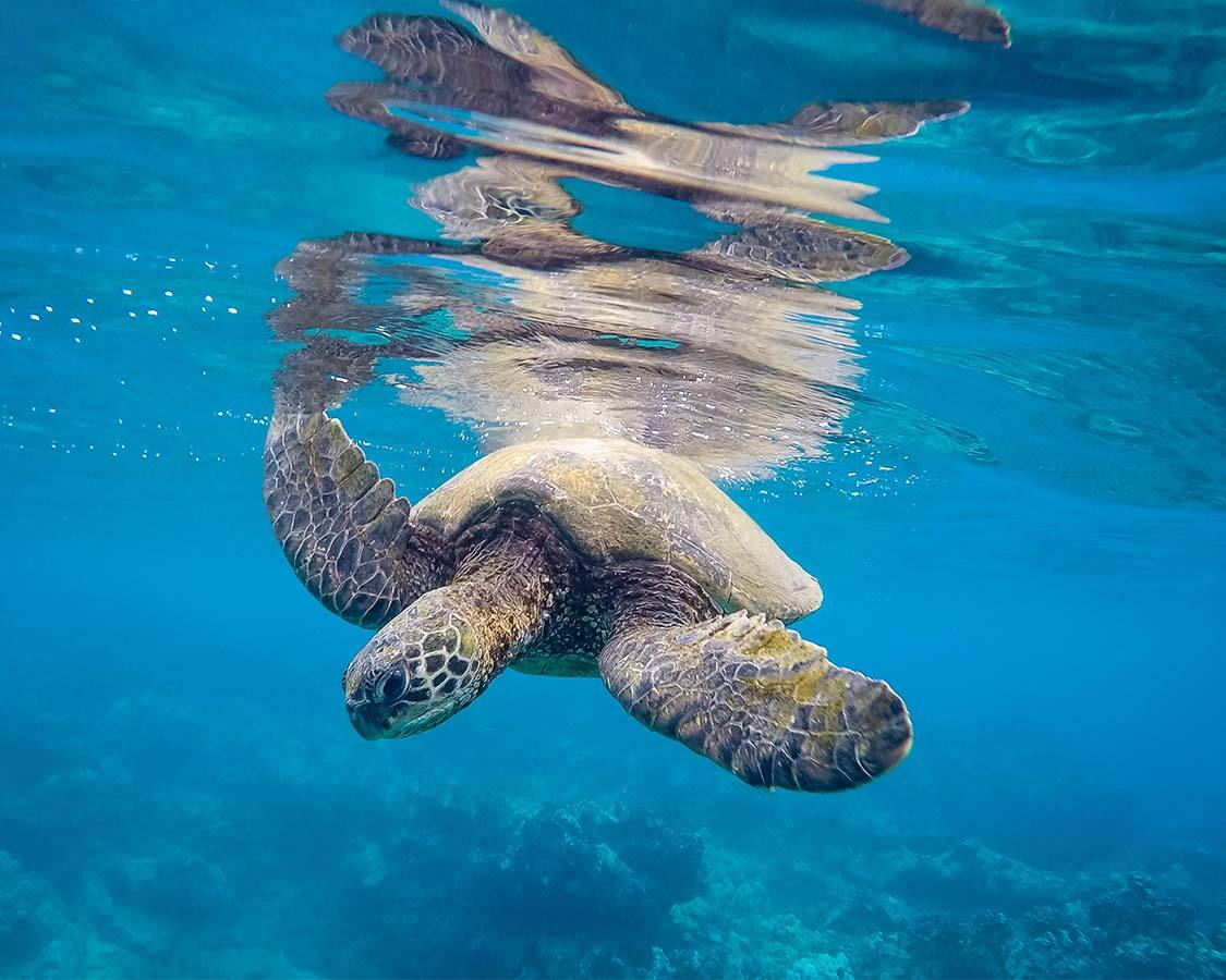 Best reef safe sunscreen