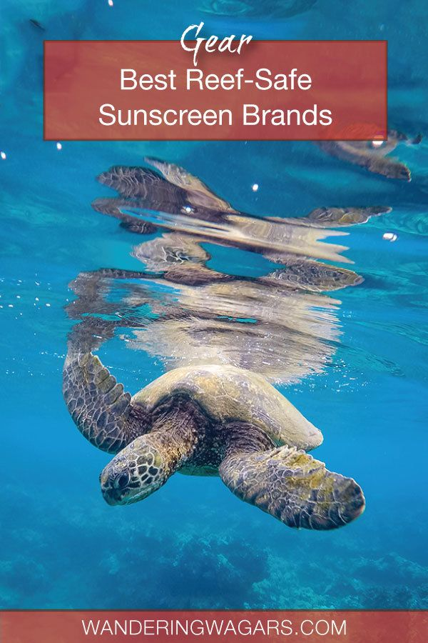 Best reef safe sunscreen brands