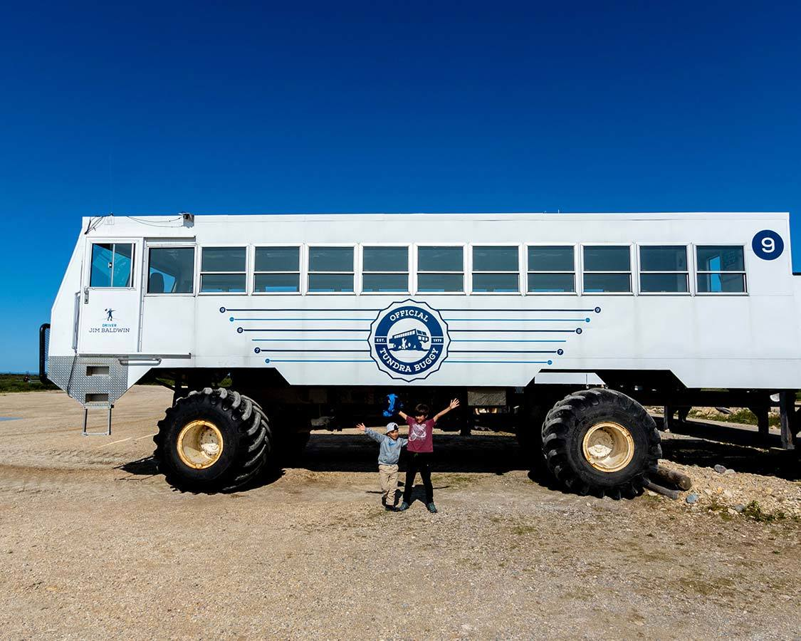 Experiencing Wildlife On a Churchill Tundra Buggy Adventure