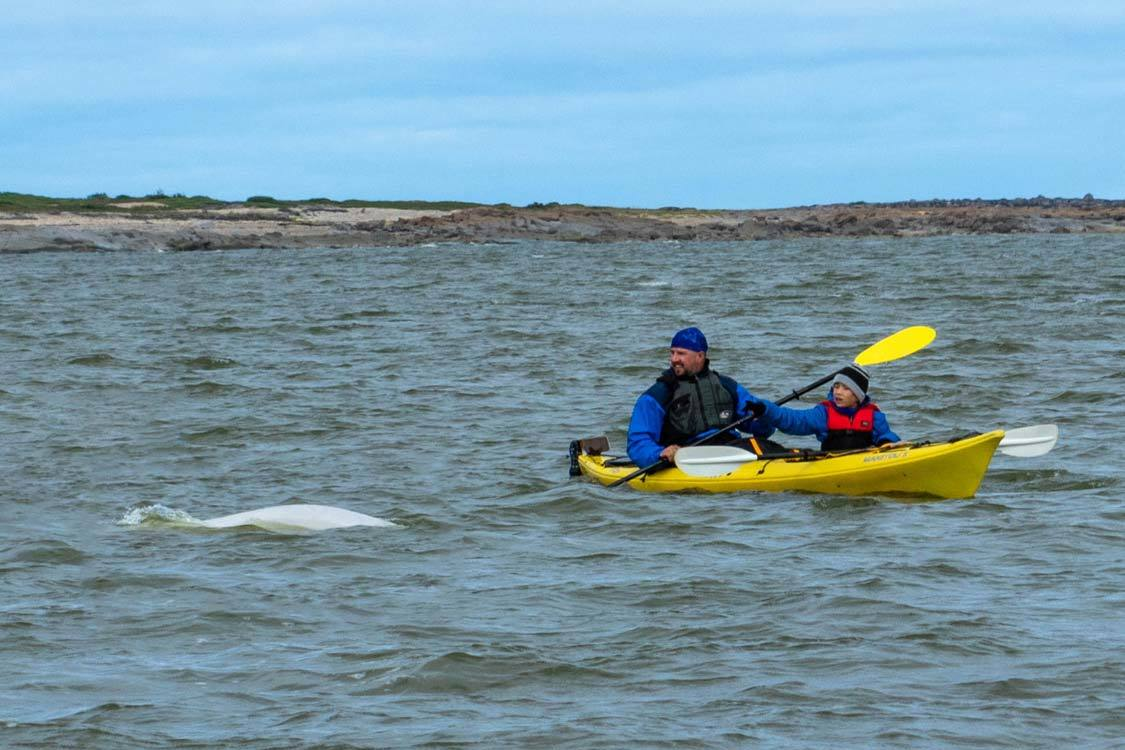 Manitoba things to do Kayaking with Beluga Whales