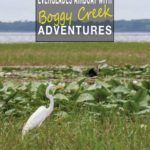 Crane in Boggy Creek Marsh on an Everglades Airboat Tour