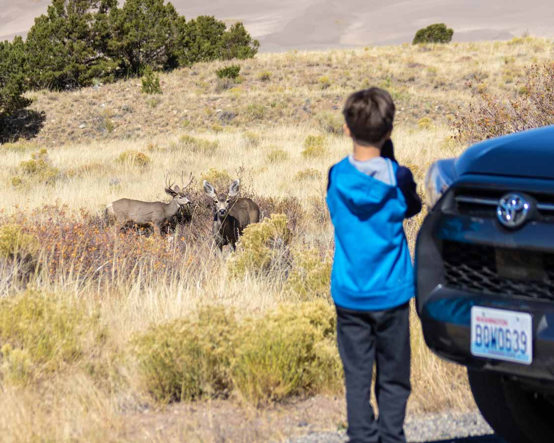 Boy photographing deer at Great Sand Dunes National Park