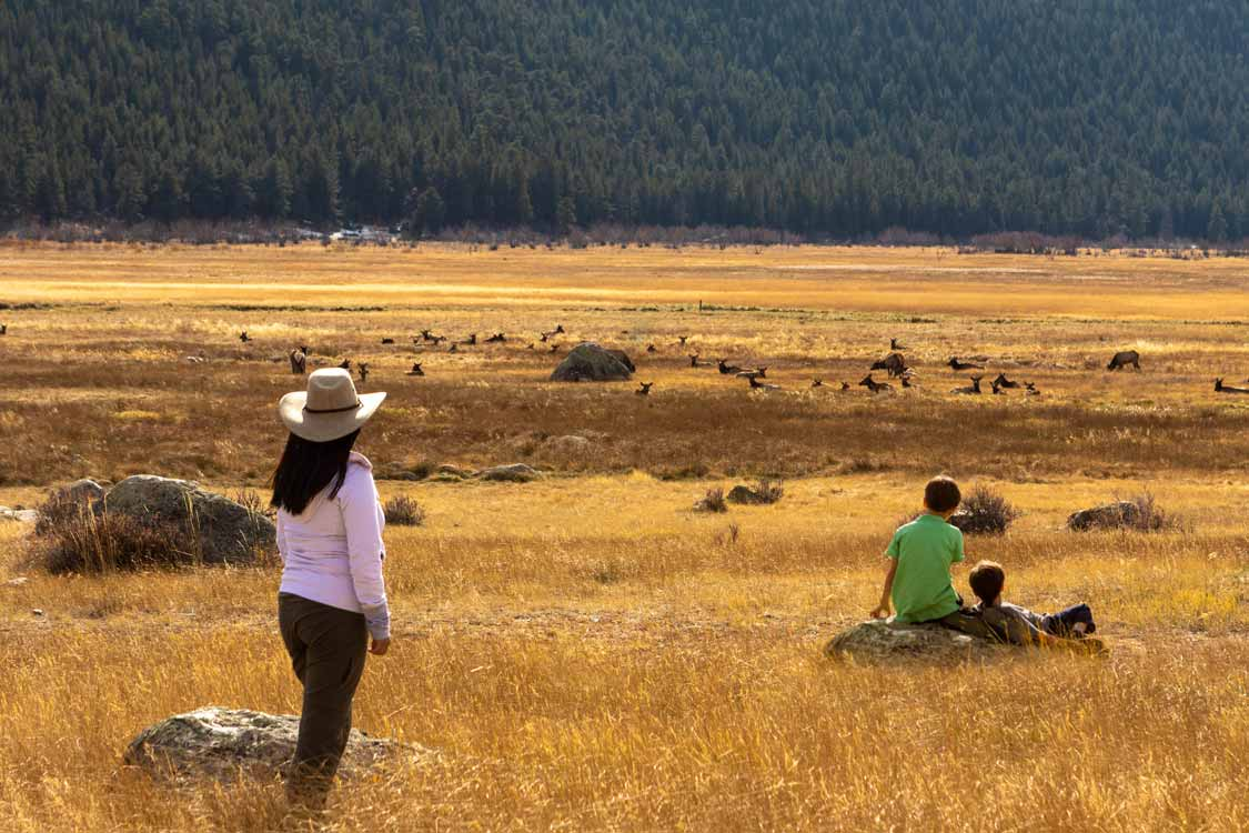 Mother and boys watching elk at Rocky Mountain National Park
