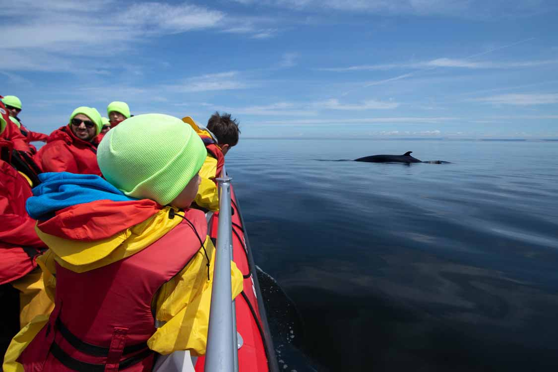 Whales on the St Lawrence River in Quebec