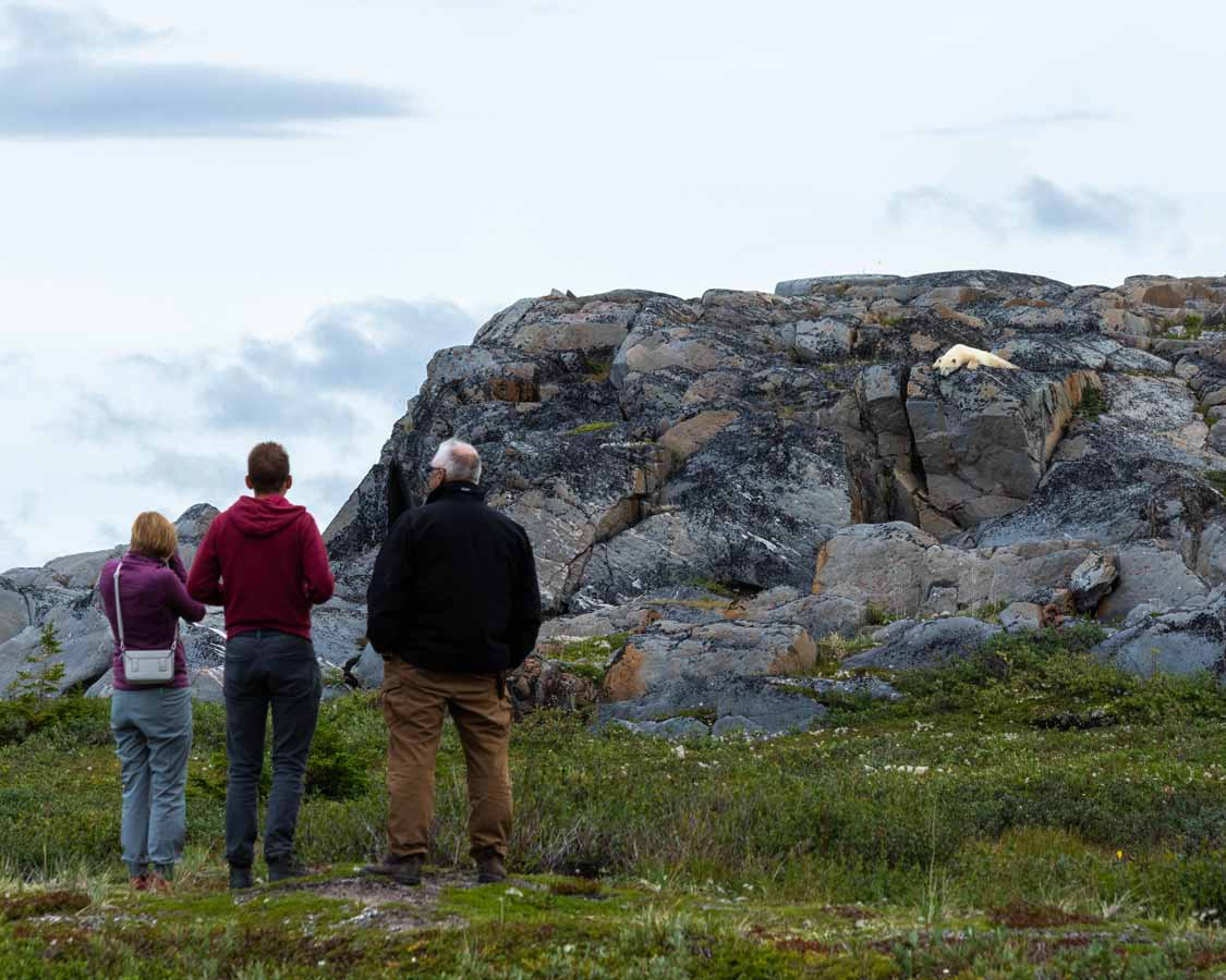 tourists watching polar bears on rocks in Churchill Manitoba