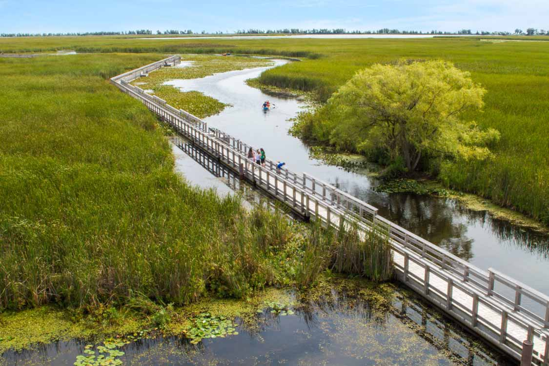 Point Pelee Marsh Boardwalk Canoeing