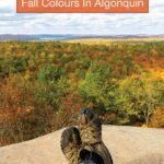 Fall colours in Algonquin Park
