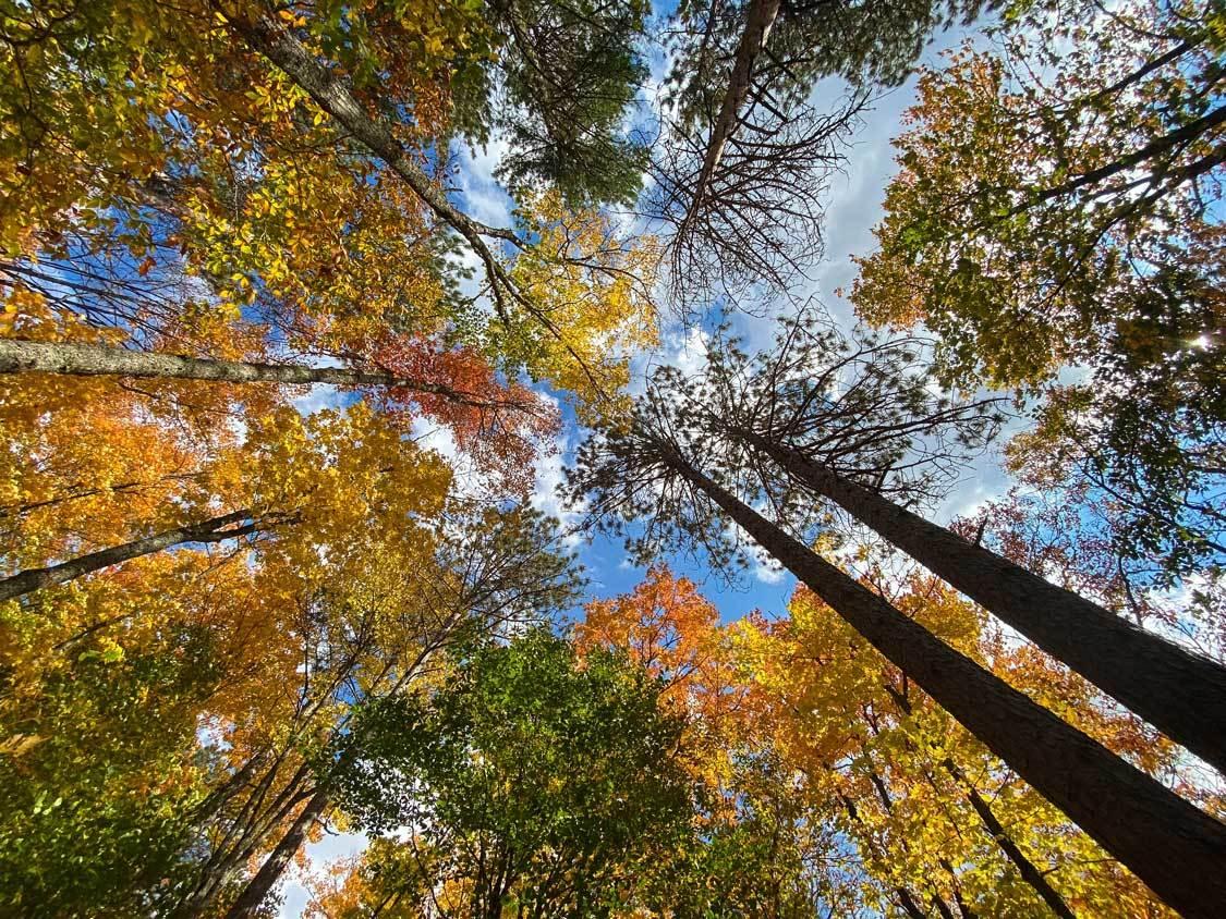Fall colours road trip through Algonquin Park