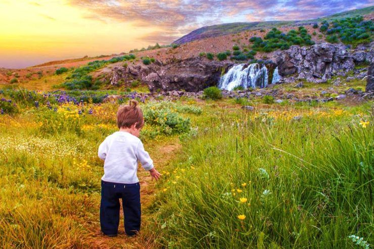 Young boy walking through a field of flowers near a waterfall in Iceland